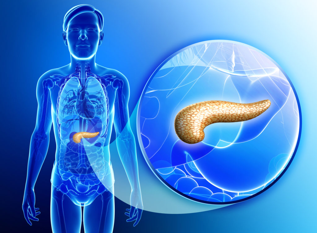 Hello, I am Your Pancreas